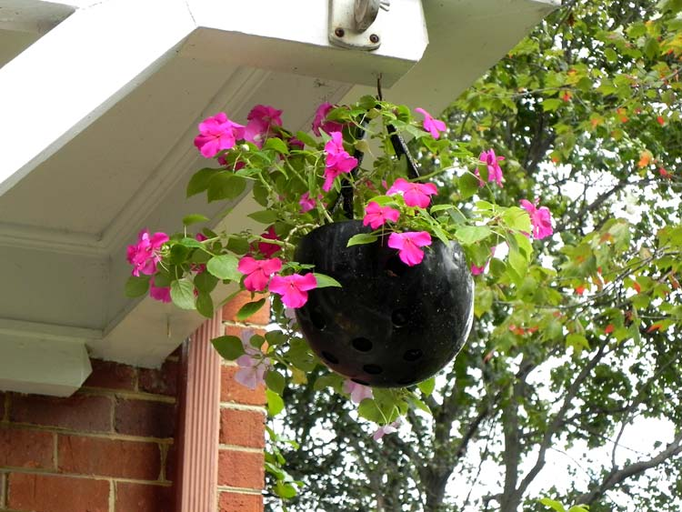 Helmet as flowerpot photo
